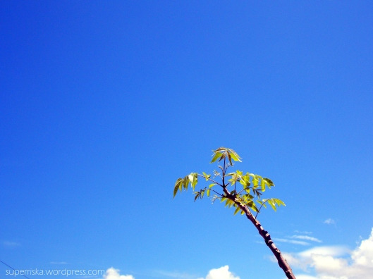 blue sky 5