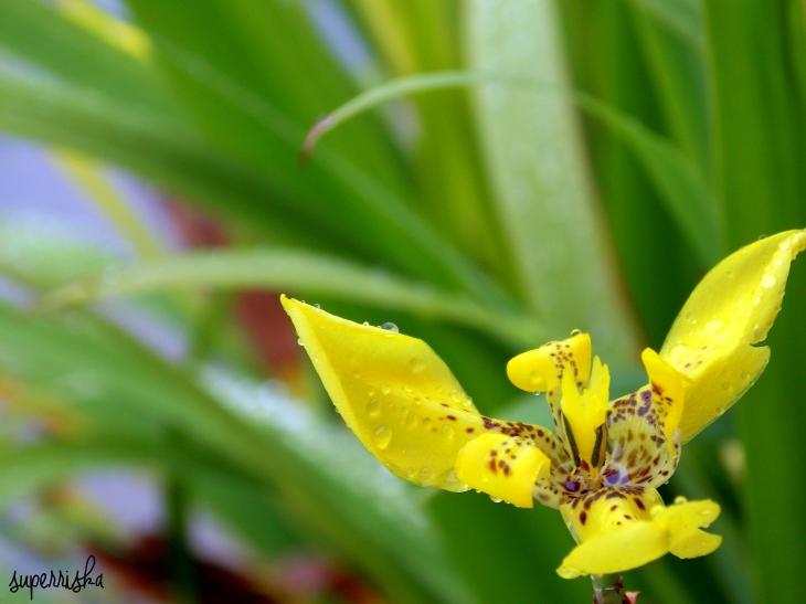 wet orchid.jpg